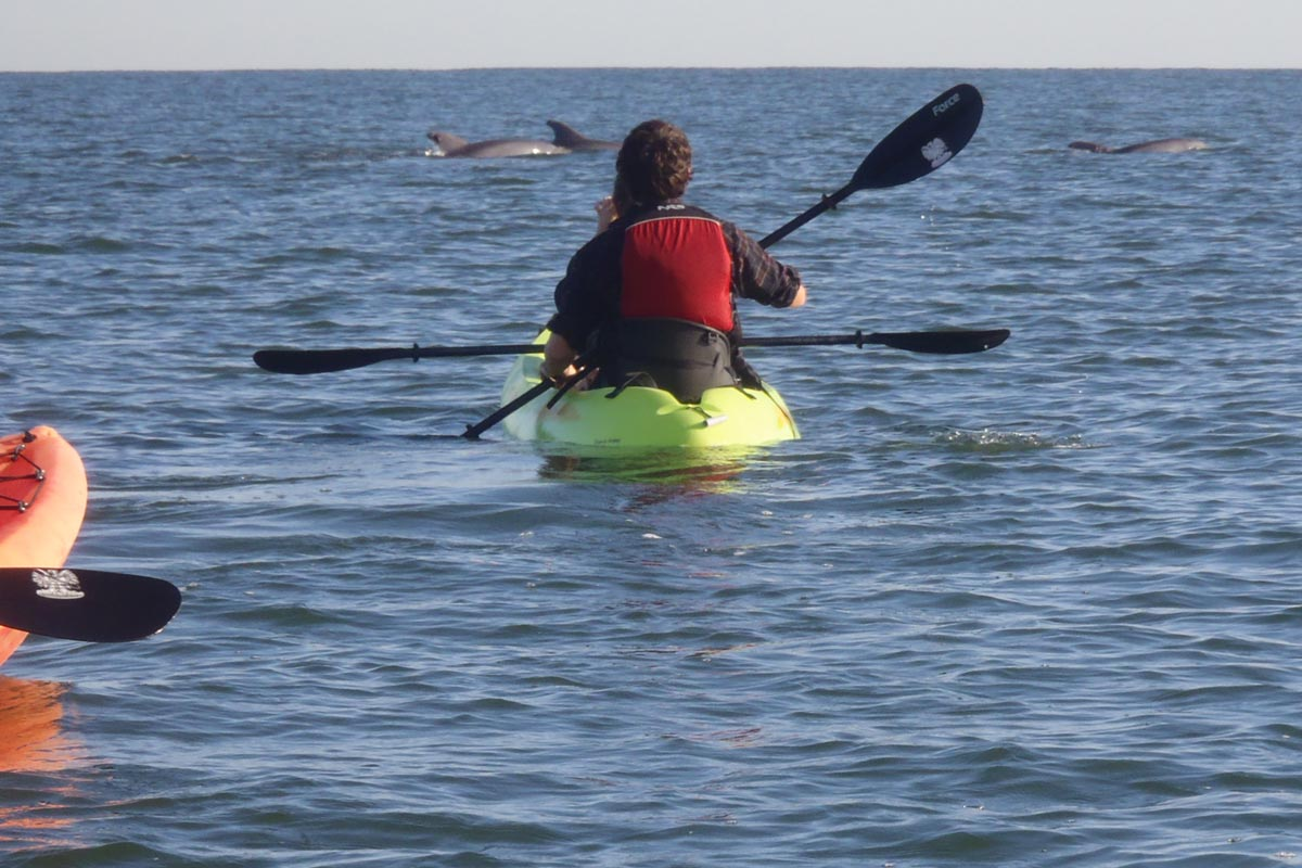 dolphin-watching-kayak-tour-virginia-beach-PA150062