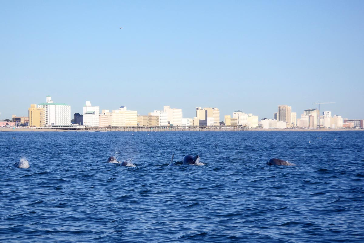 dolphin-watching-tour-virginia-beach-PA150028